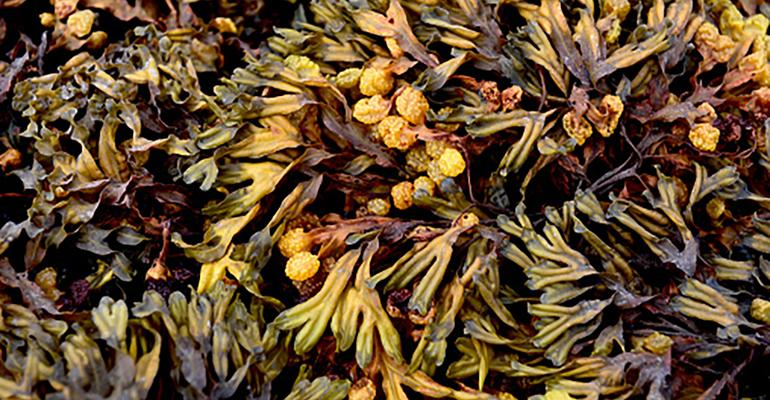 What We're Reading: Why a commercial fisherman now farms seaweed
