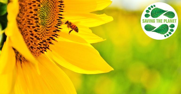 BeeSunflowerSustain.jpg