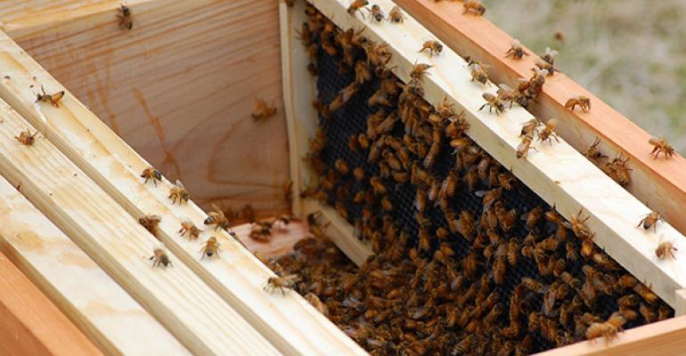 A look inside Hilton Oak Brook's beehive
