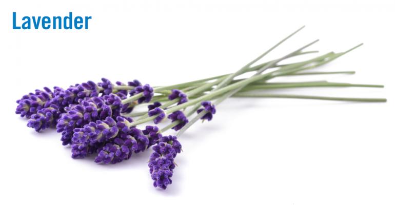lavender-2-flower.png