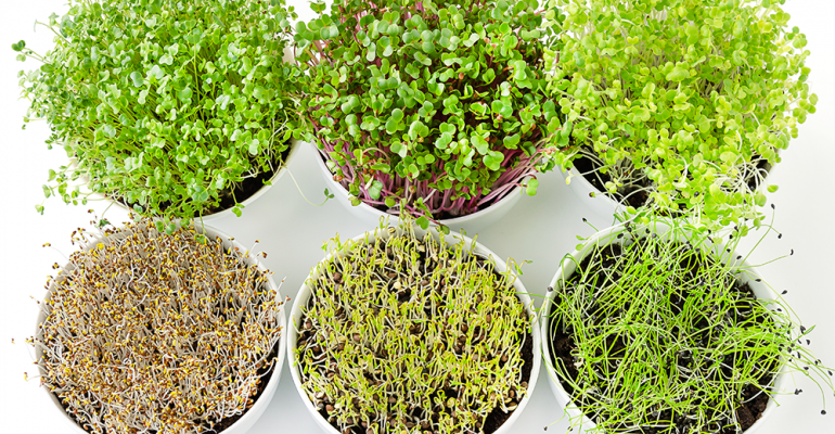 microgreens-flavor-of-the-week.png