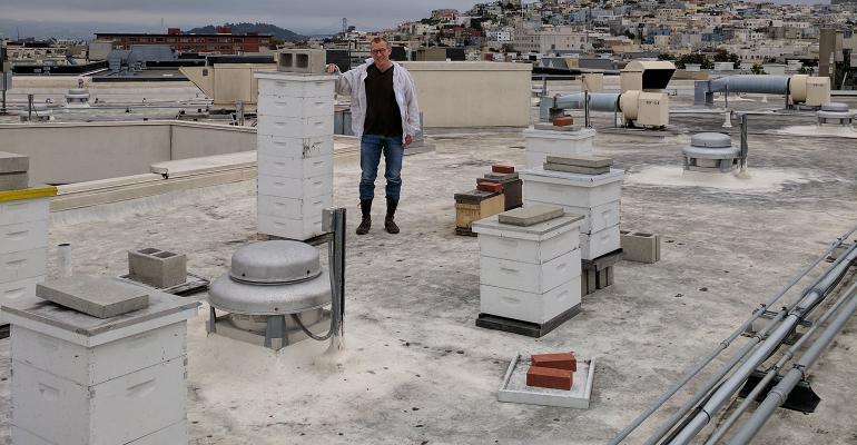 san_francisco_beekeeper.jpg