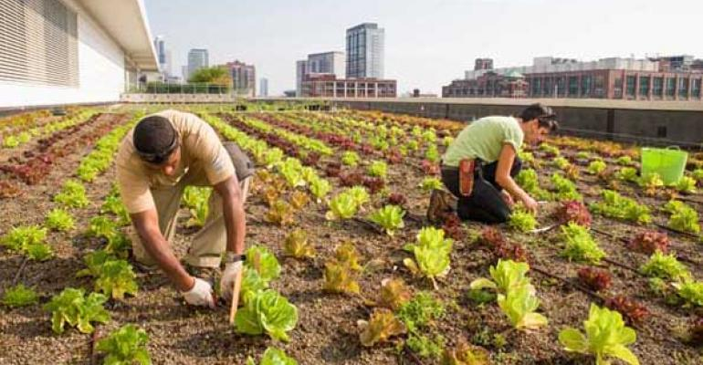 Banquetgoers at Chicagorsquos McCormick Place often dine on produce harvested from the facilityrsquos extensive rooftop garden