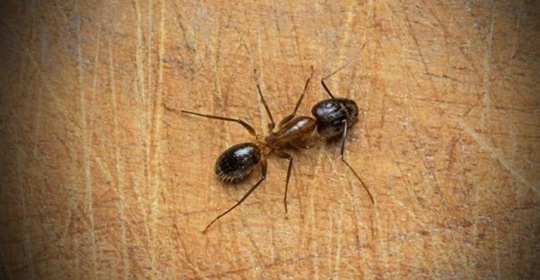 How to keep ants out of your restaurant