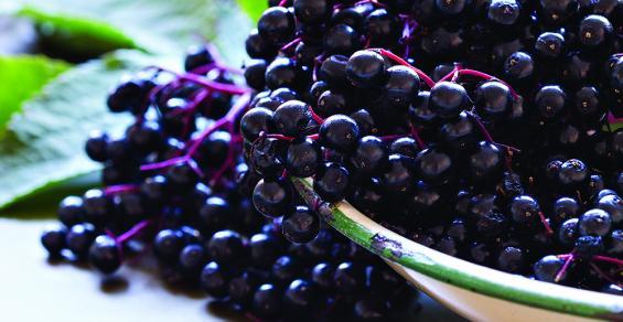 Elderberry-superfood.jpg