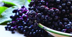 Elderberry-superfood.jpg