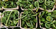 fiddlehead-fern-flavor-of-the-week.jpg