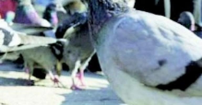 Take Birds Off the Patio Menu