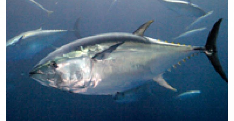 Best Practices For Bluefin Tuna
