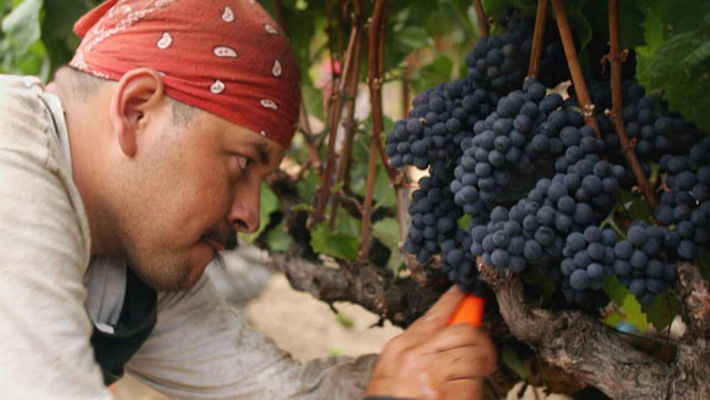 2013 restaurant wine price forecast: Stability